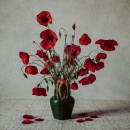 Iga Koczorowska dreams poppies 1